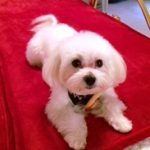 Sienna's Pampered Pets